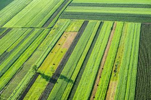 Satellite data analysis remote sensing earth observation Monitoring agricultural fields